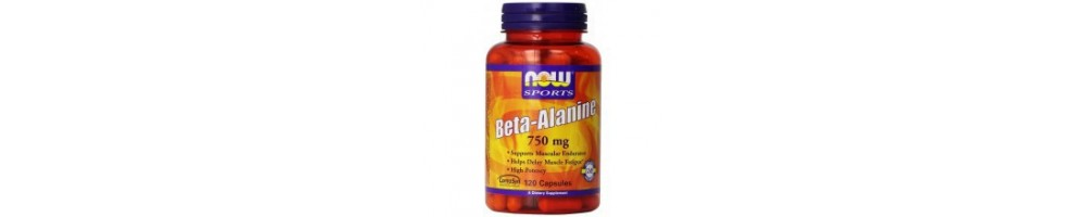 Beta Alanine et Carnosine